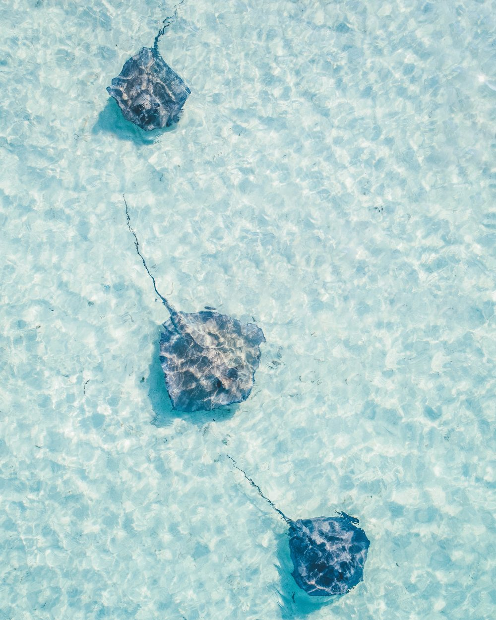 Pierce Gainey Drone Photo of Stingrays