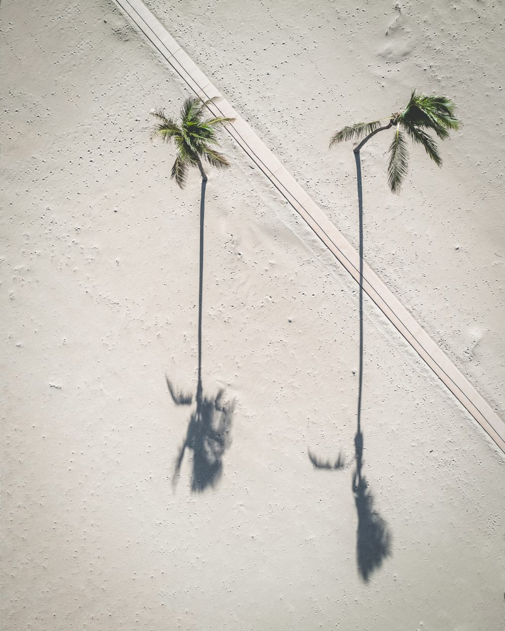 Drone image of palm trees