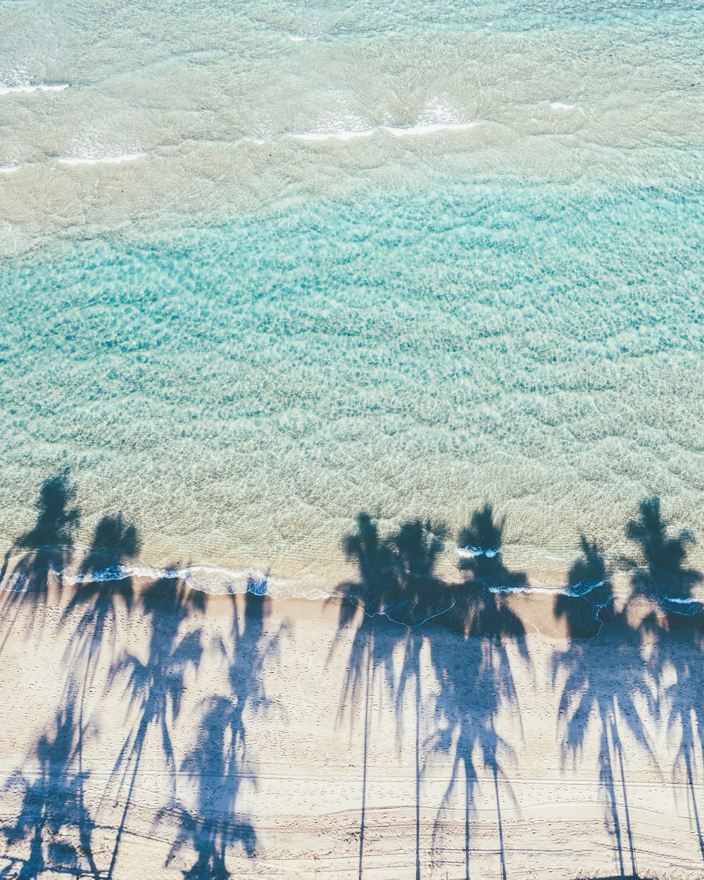 Drone image of the beach with palm trees' reflections