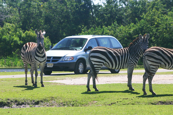 Things To Do in South Florida Lion Country Safari