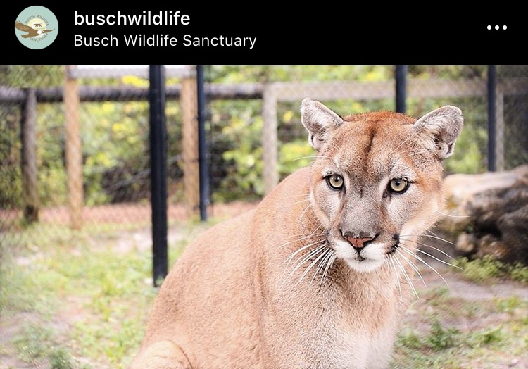 Busch Wildlife Sanctuary Palm Beach County